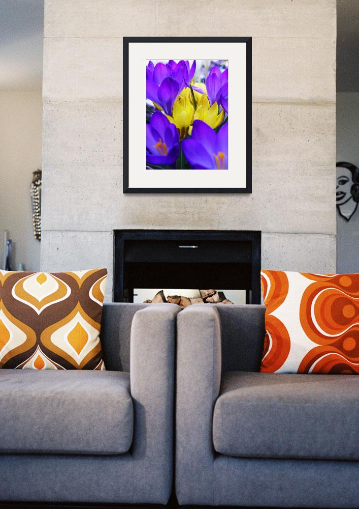 """Crocus Bulbs Spring Flowers&quot  (2012) by vpicks"