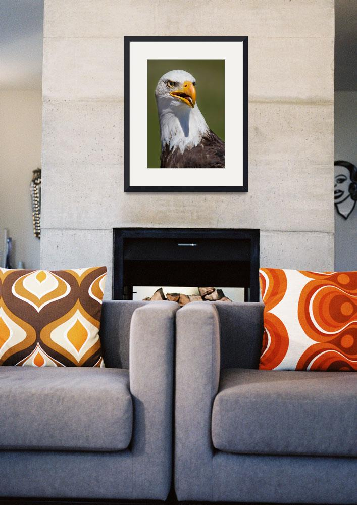 """Portrait of an Eagle&quot  (2012) by DNA-ARTS"