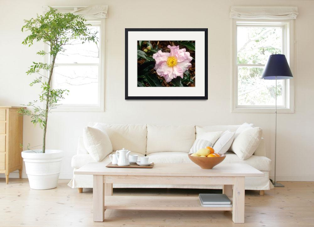 """Camellia Misty Morn Flower&quot  (2006) by kphotos"