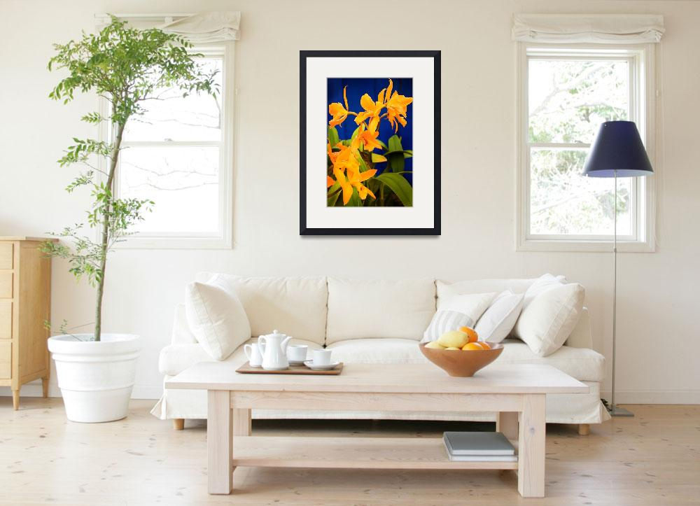 """Yellow Orange Orchids with Blue Wall&quot  (2008) by stephenbmack"