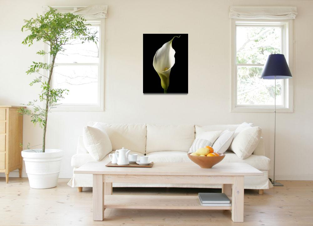 """Arum Lily&quot  (2010) by roger"