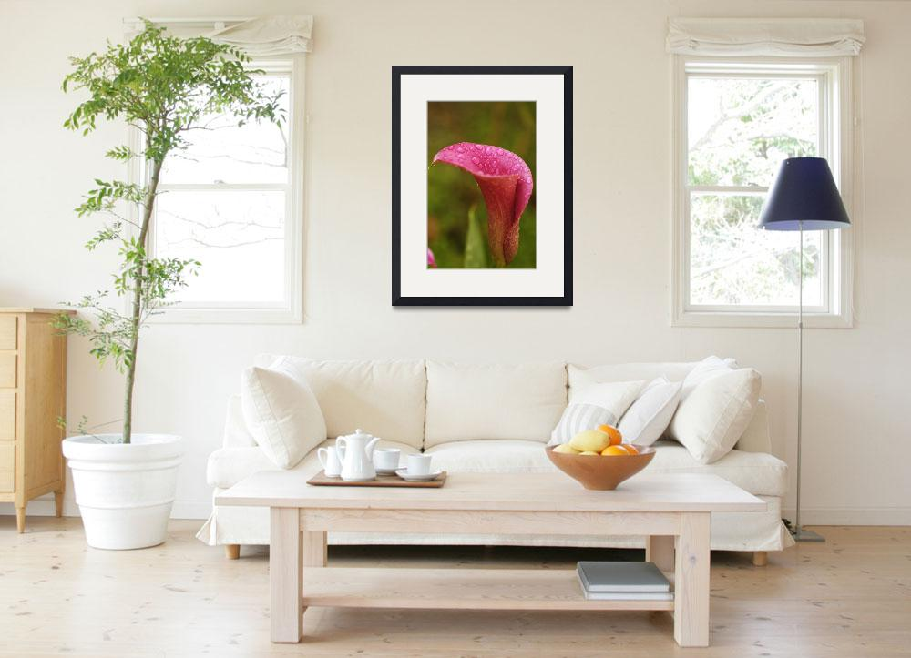 """Single Pink Calla Vertical&quot  (2005) by AmbientCreations"