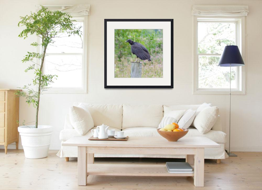 """Black Vulture&quot  (2012) by WildAboutNaturePhotography"