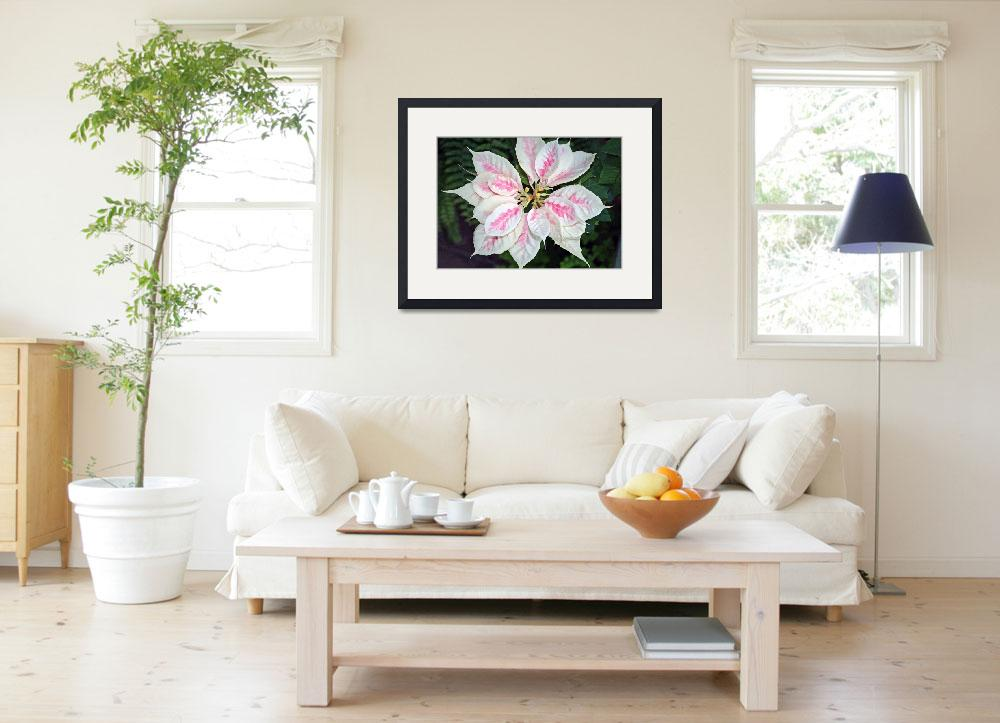 """Poinsettia Flower  Pink and White&quot  (2010) by KsWorldArt"