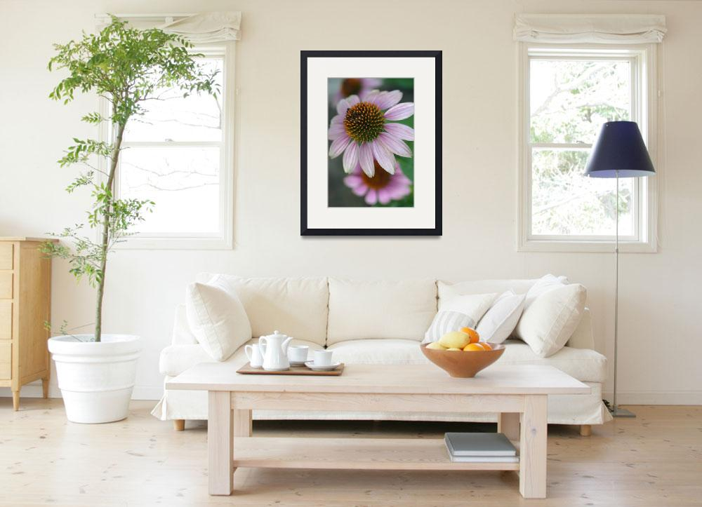 """Purple Echinacea or Coneflower&quot  (2007) by imaginativeimagery"