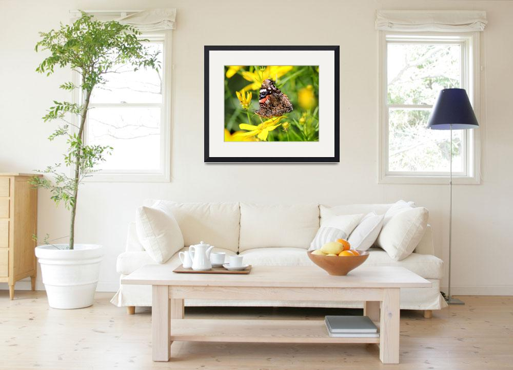 """Red Admiral Butterfly on Yellow Coreopsis&quot  (2014) by KsWorldArt"