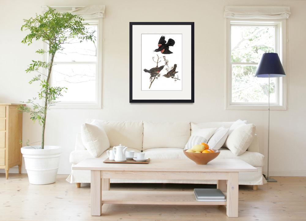 """Red-Winged Blackbird Audubon Print&quot  by ArtLoversOnline"