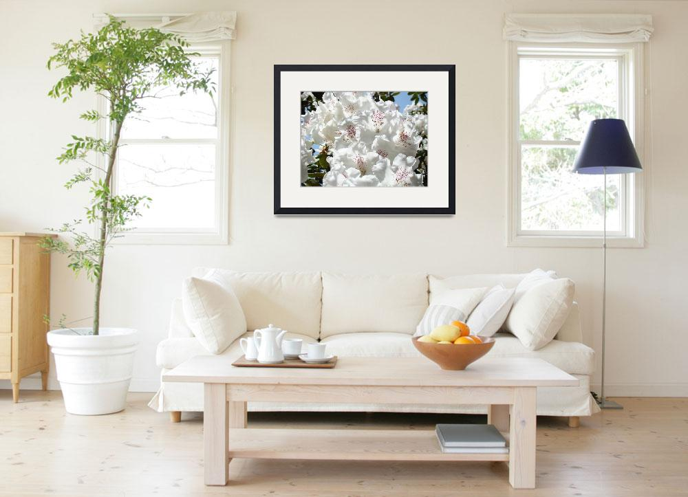 """Floral art prints White Pink Rhododendrons Baslee&quot  (2010) by BasleeTroutman"