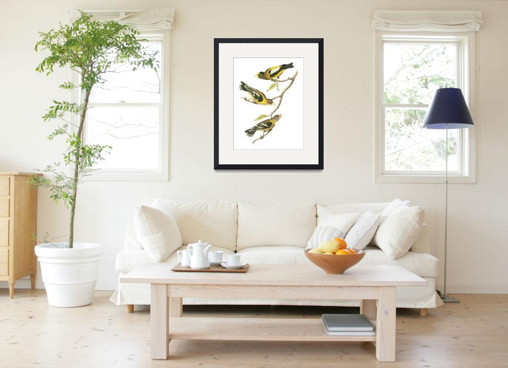 """Evening Grosbeak Audubon Print&quot  by ArtLoversOnline"