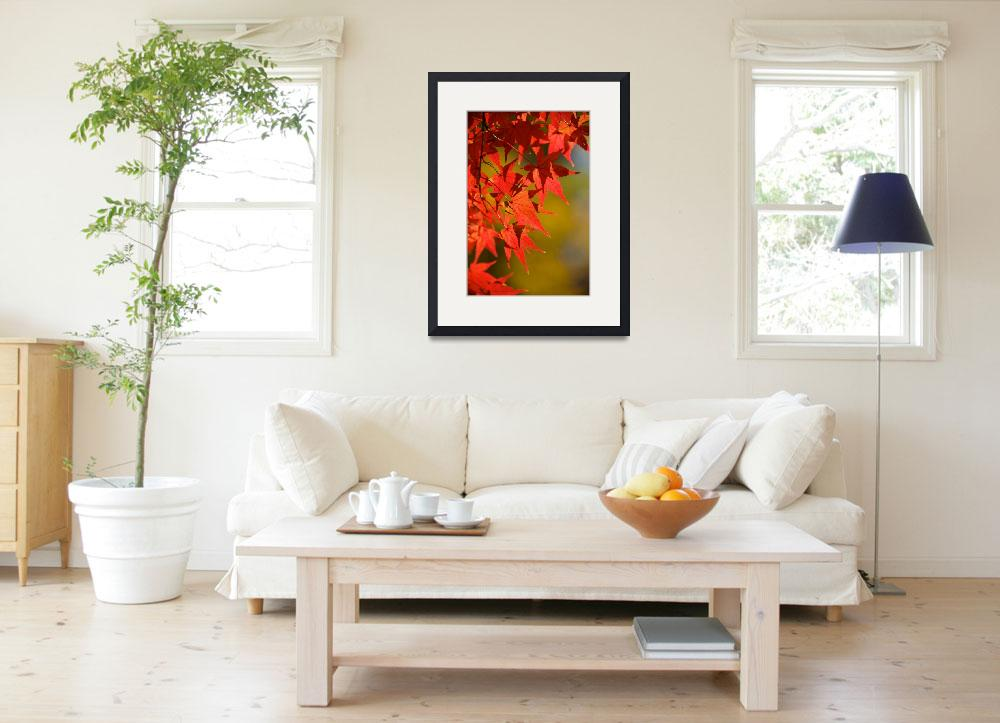 """Japanese Maple&quot  (2010) by ImageArt-Photography"