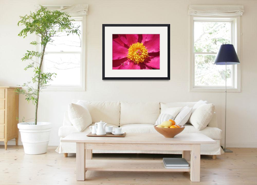 """Flowering Red Peony With Yellow Center&quot  (2008) by garthglazier"
