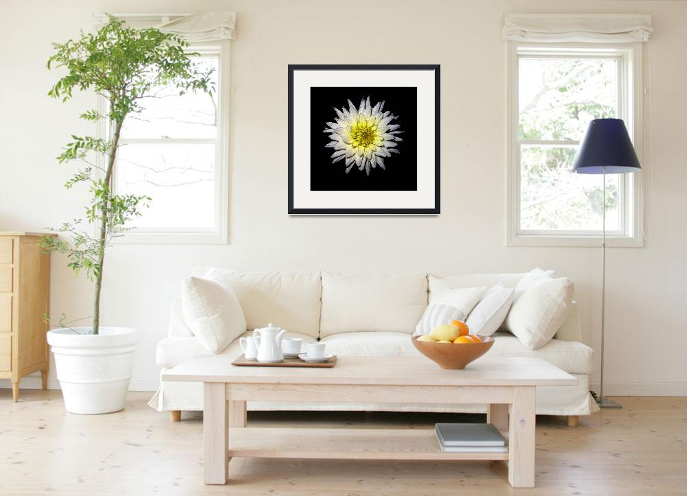 """White Dahlia Against Black&quot  (2007) by bavosiphotoart"