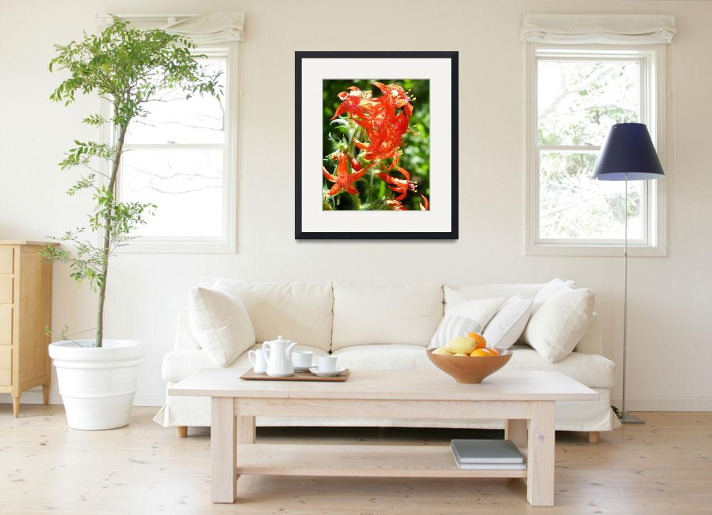 """Botanical - Red Scarlet Gilia - Outdoors Floral&quot  by artsandi"