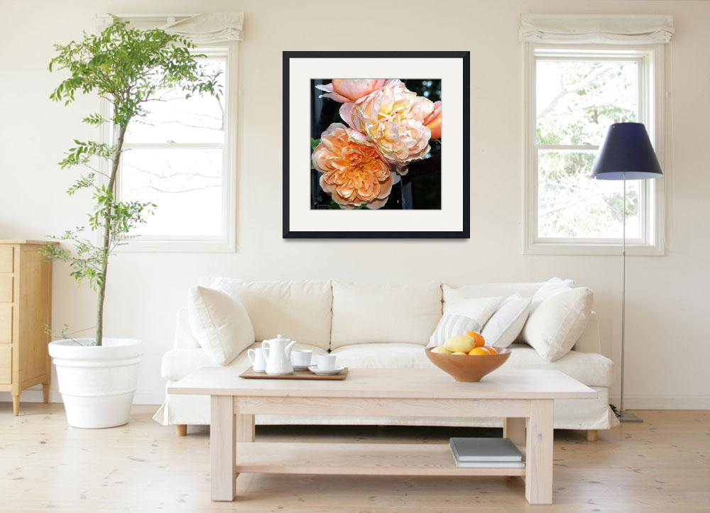 """Impressionist Heirloom Roses Original Photo by Gin&quot  (2008) by GinetteCallaway"