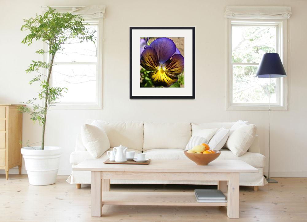"""Purple Pansy&quot  (2010) by PatriciaHeise"