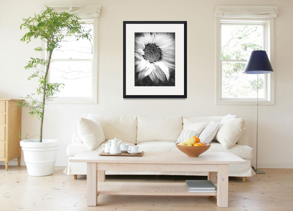 """Sunflower White And Black&quot  (2014) by RubinoFineArt"
