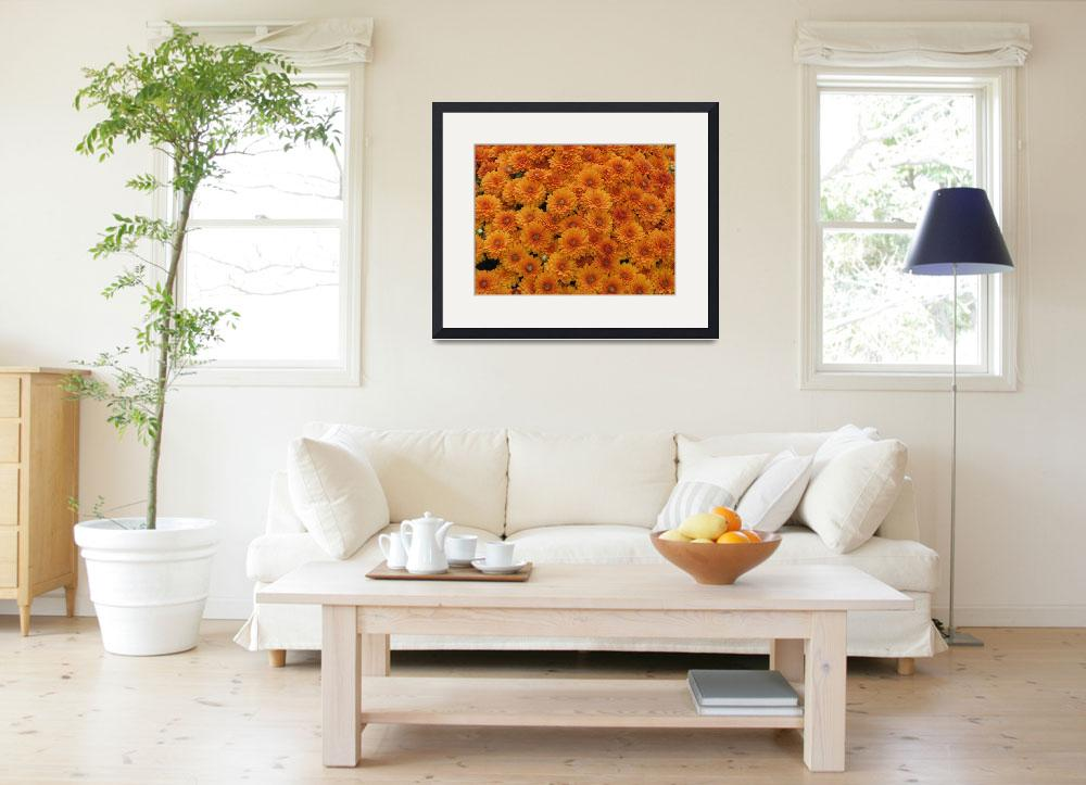 """Orange Mums&quot  (2009) by Whittier"