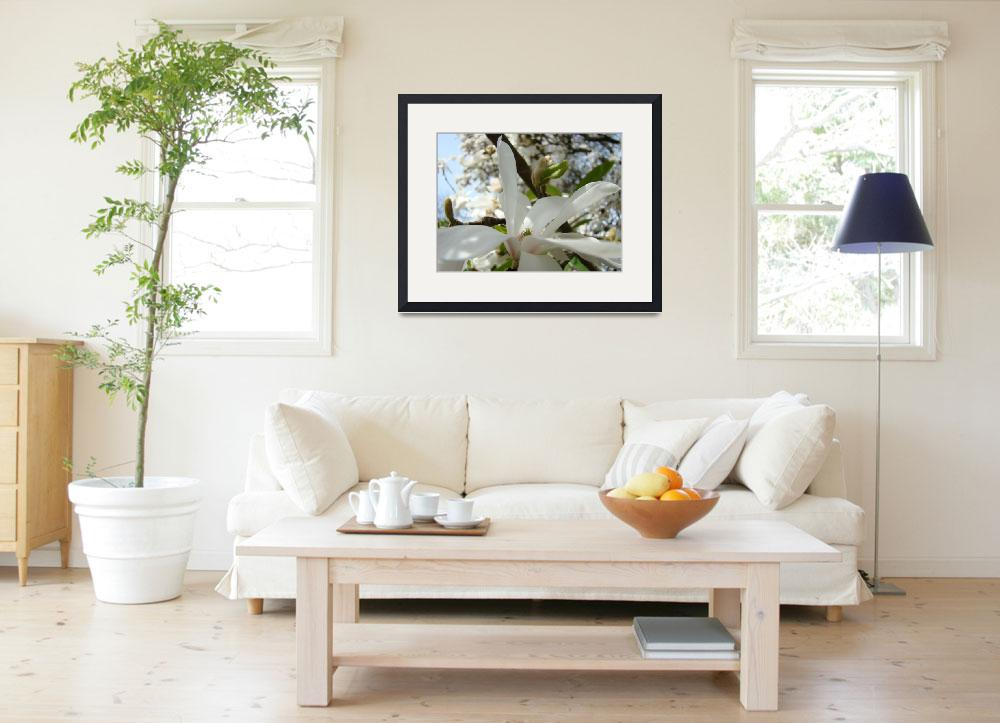 """Magnolia Flower White Spring Magnolia Tree Art&quot  by BasleeTroutman"