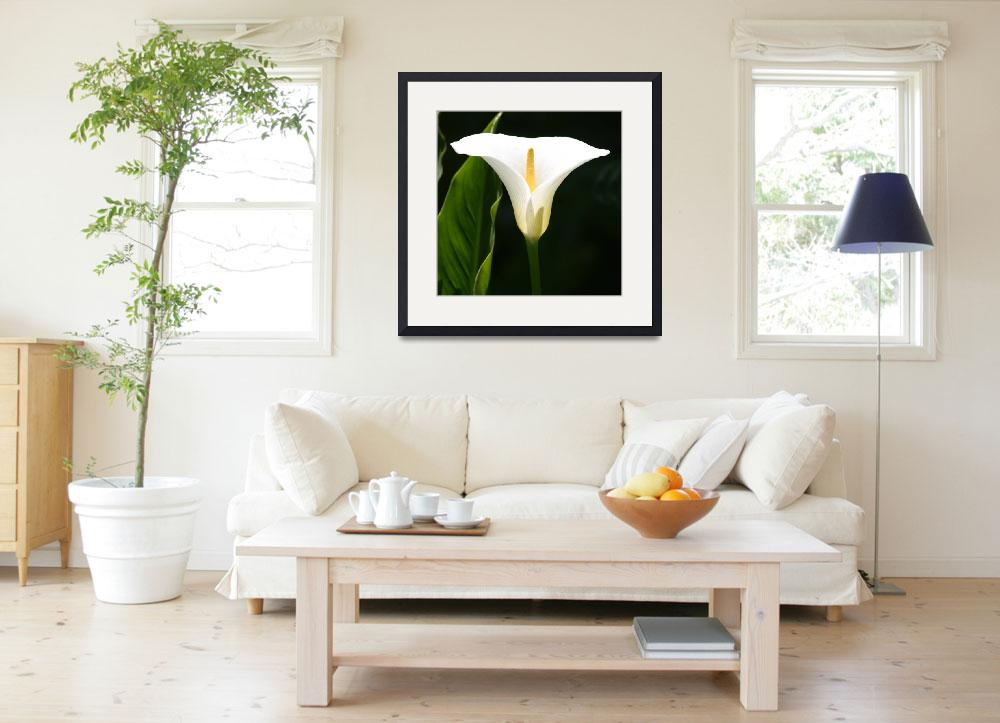 """Calla Lily&quot  (2010) by SharpArt"