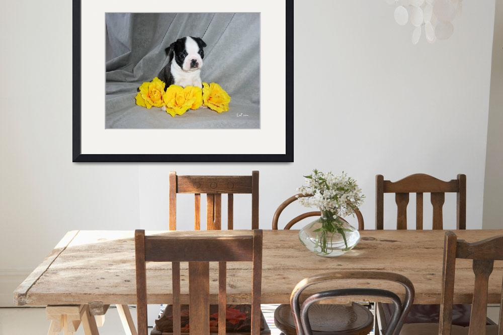 """Boston Terrier Puppy With Yellow Roses&quot  (2004) by ACuteProduction"