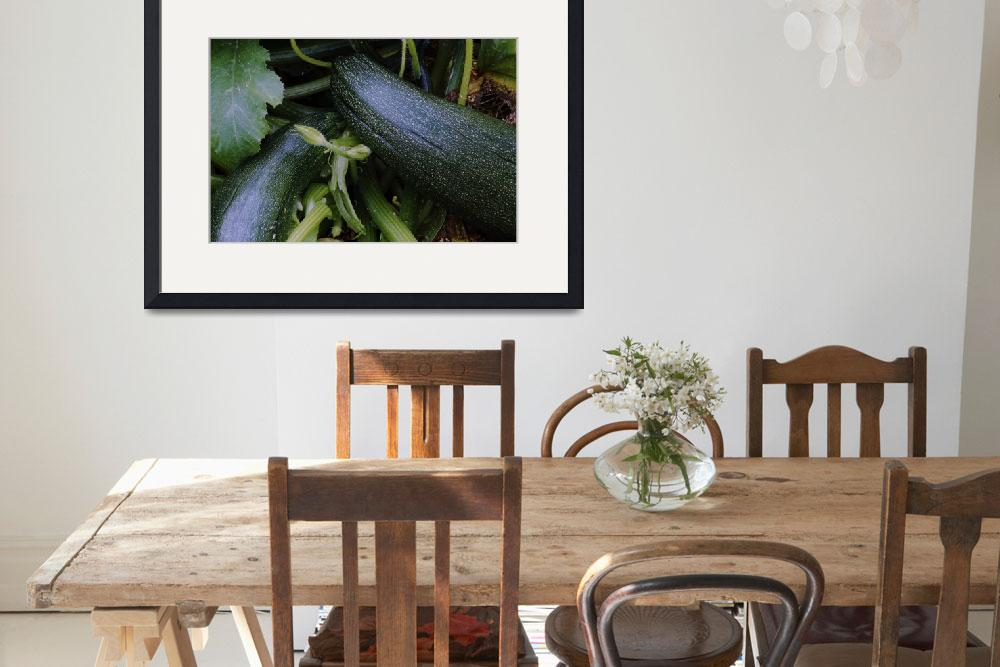 """Zucchini squash growing on vine&quot  by Panoramic_Images"