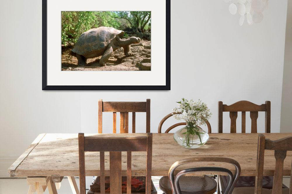 """Endangered Galapagos Giant Tortoise&quot  by ArtLoversOnline"