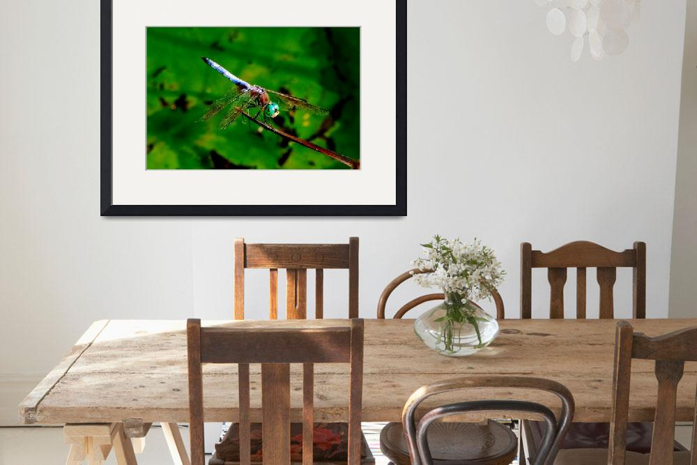 """Dragon Fly&quot  (2009) by bavosiphotoart"