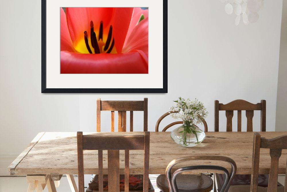 """Red Tulip Flower Macro art print Baslee Troutman&quot  (2010) by BasleeTroutman"