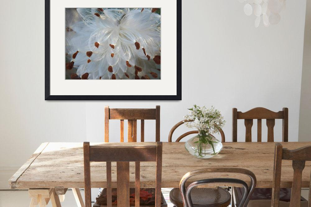 """Botanical - Common Milkweed - Outdoors Floral&quot  by artsandi"