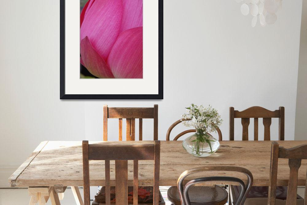 """pink lotus flower&quot  by nyc-naturephoto"