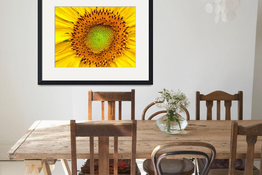 """Sunflower Close-up&quot  (2011) by photosbybritney"