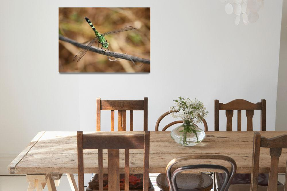 """Green Dragonfly on Twig&quot  by Groecar"