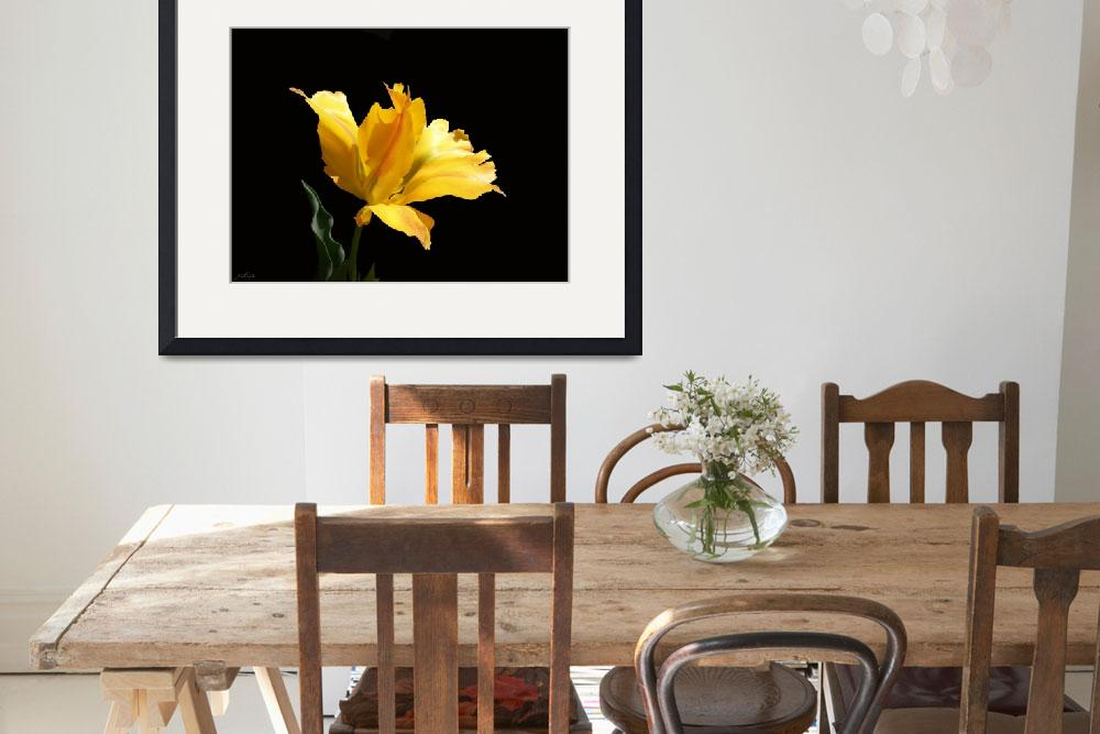 """Yellow Parrot Tulip&quot  (2007) by Elasia"