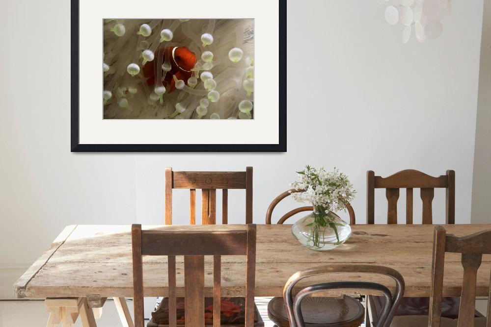 """Anemone Fish 022106KRH101&quot  (1997) by howardwesleyhall"