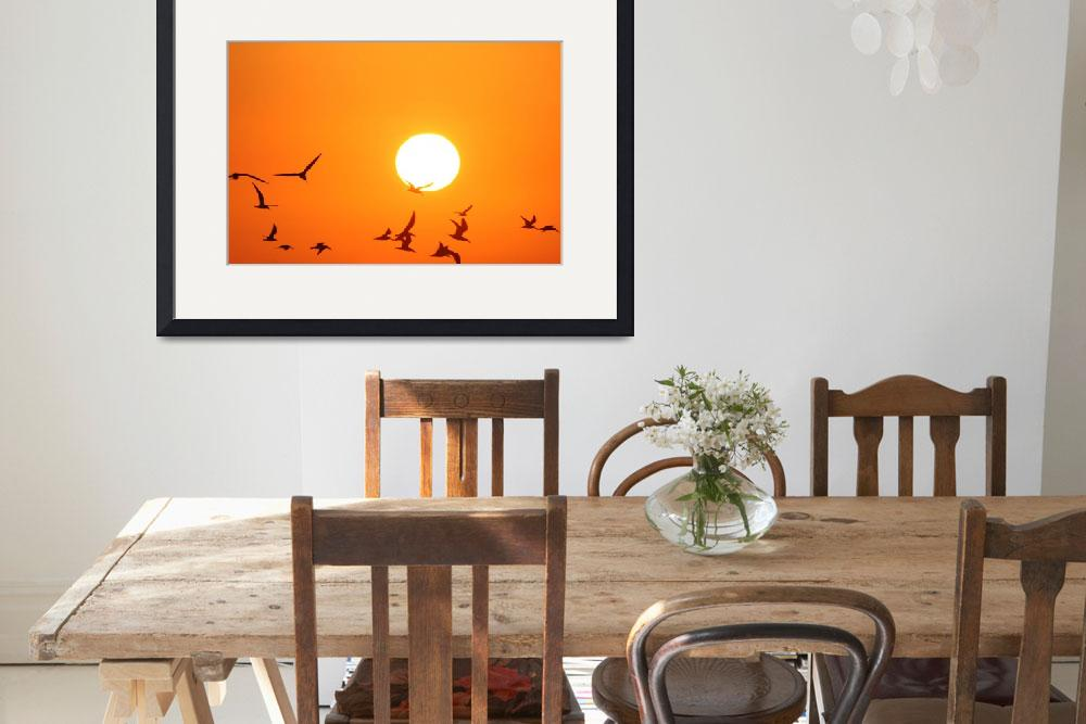 """Seagulls Flying Infront of the Sun&quot  (2011) by DonnaCorless"