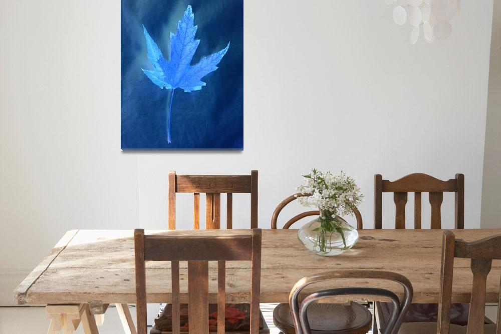 """Blue Shadows of a Silver Maple Leaf&quot  by Saturato"