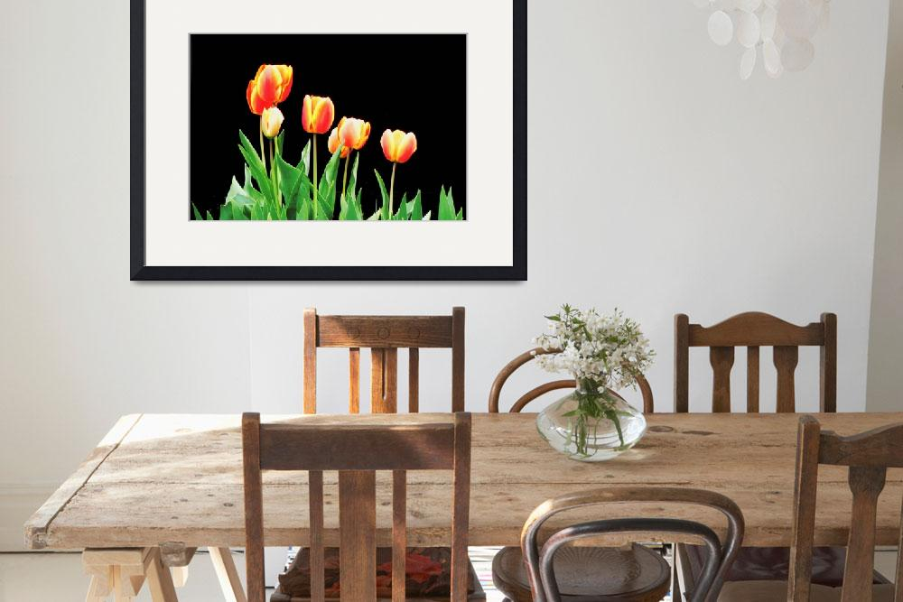 """Yellow and Orange Tulips on black background&quot  (2016) by globetrotter1"