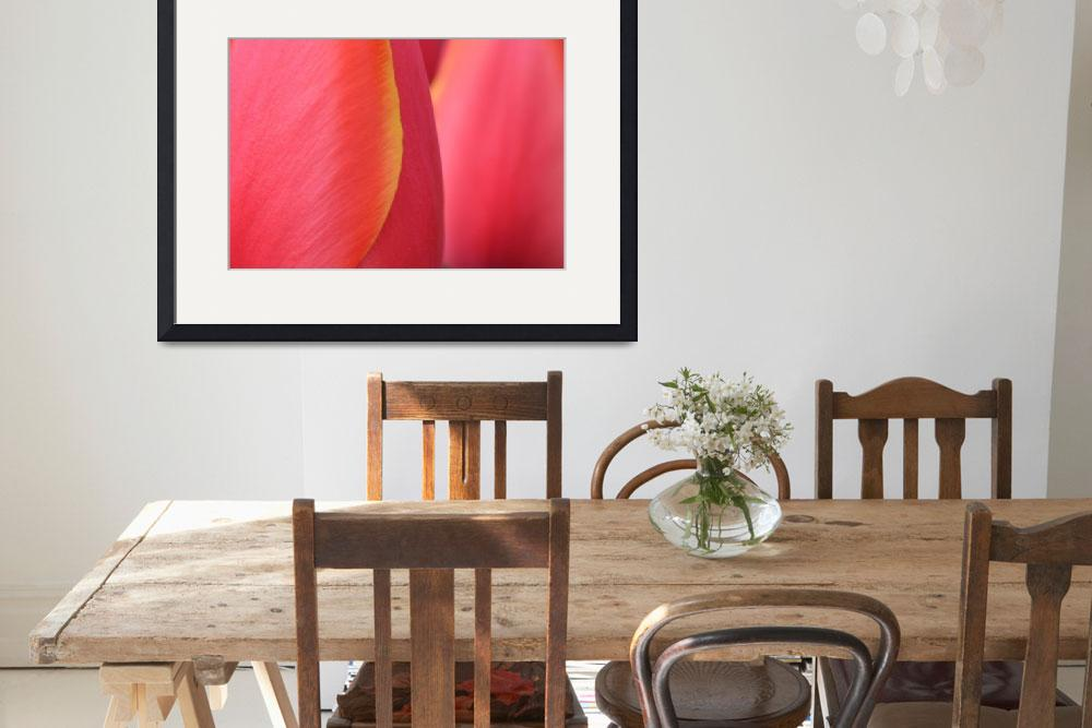 """""Pink Orange Yellow Tulip 20"" #20042315.0716 (5)&quot  (2015) by achimkrasenbrinkart"