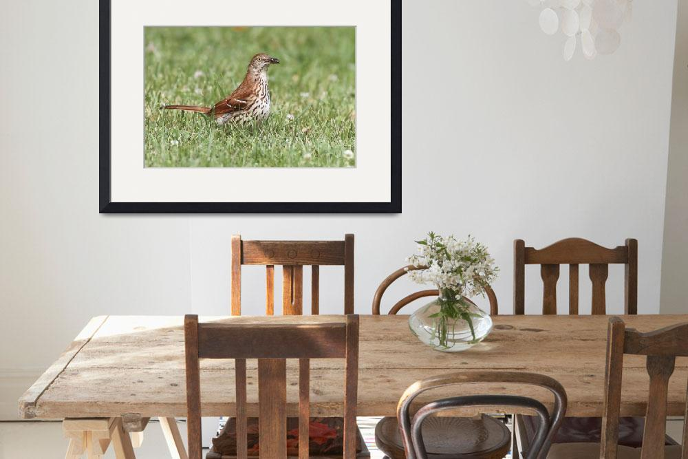 """Brown Thrasher Photograph&quot  by ArtLoversOnline"