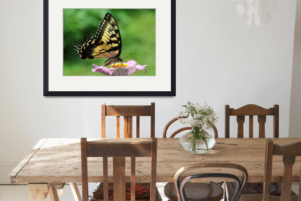 """Tiger Swallowtail Butterfly & Zinnia&quot  (2010) by evansonart"