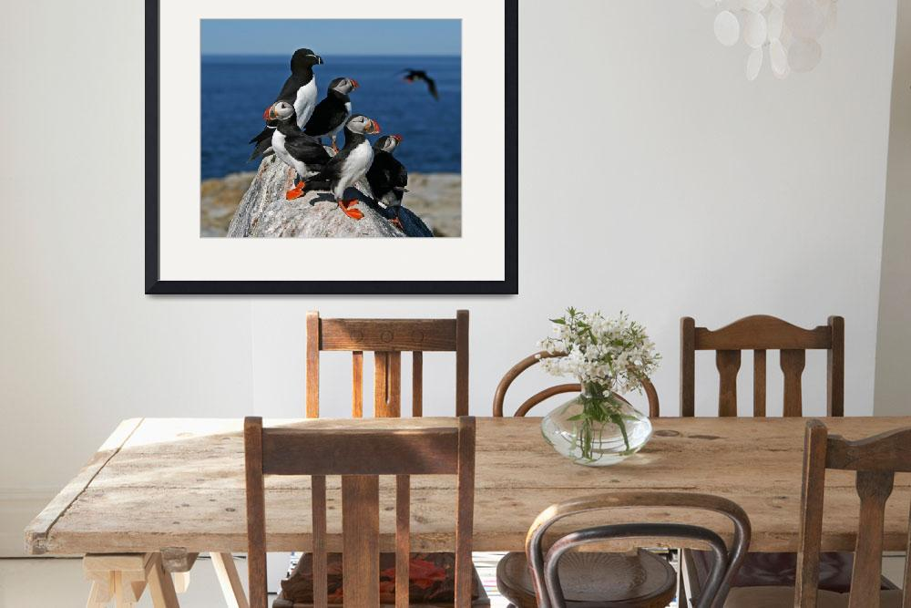 """Atlantic Puffins and Razorbill&quot  (2007) by birdphotos"