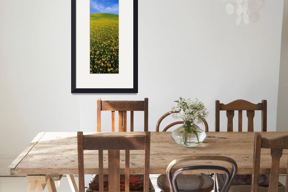 """Wild Mustard Seed Ojai CA&quot  by Panoramic_Images"