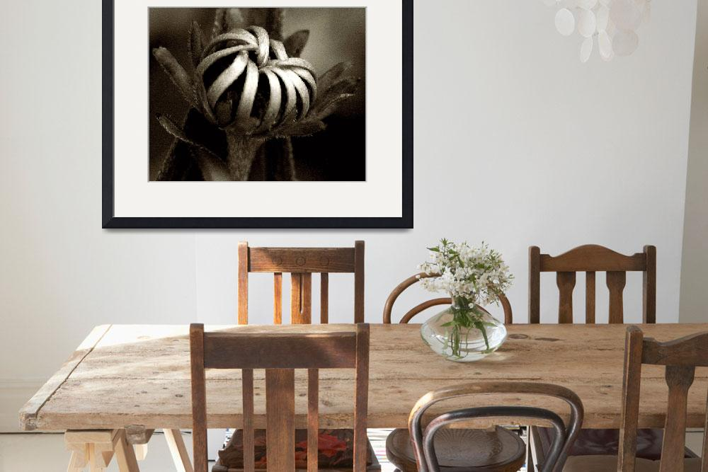 """Jail Break Blossom&quot  (2009) by bavosiphotoart"