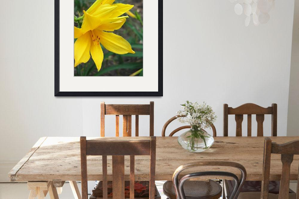 """Yellow Daylily 5&quot  (2009) by ChristopherInMexico"