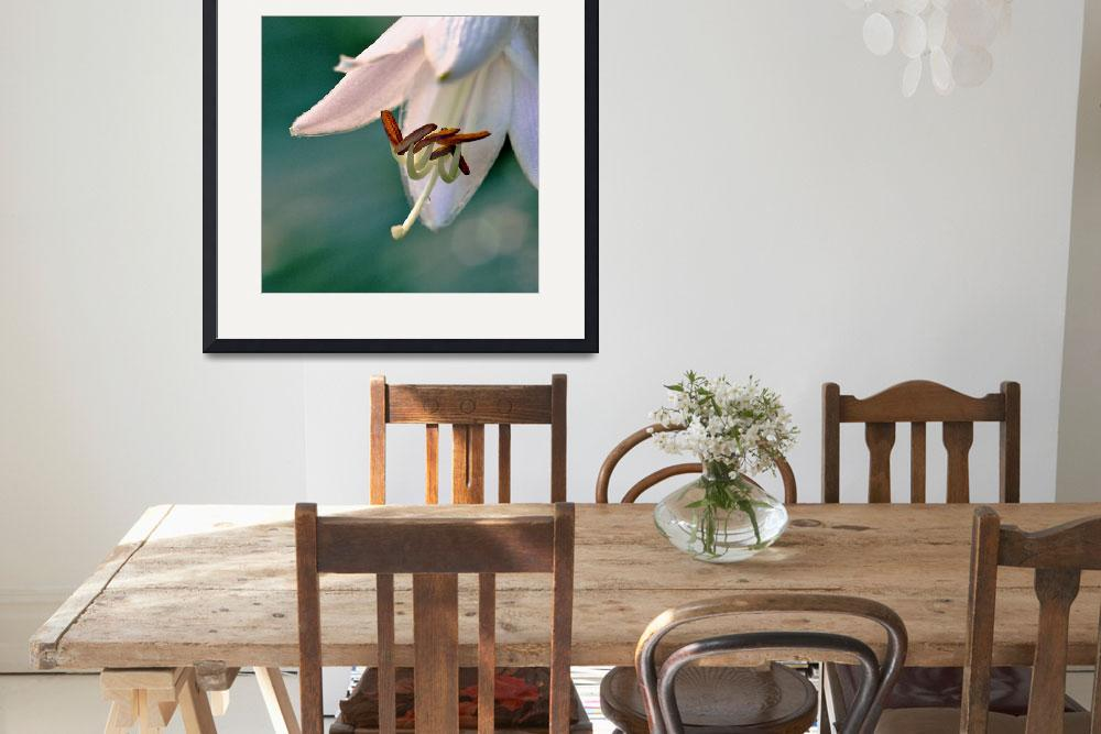 """Hosta Blossom&quot  (2012) by bavosiphotoart"