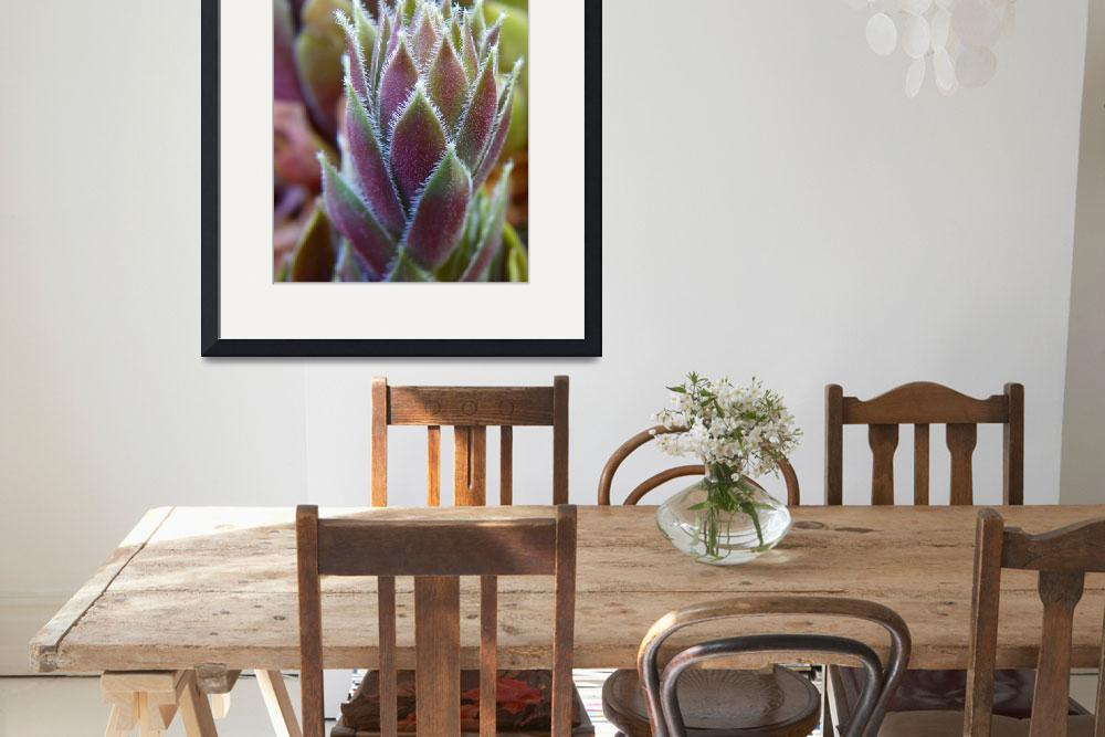 """Floral - Sempervivum Tectorum - Garden Flower&quot  by artsandi"