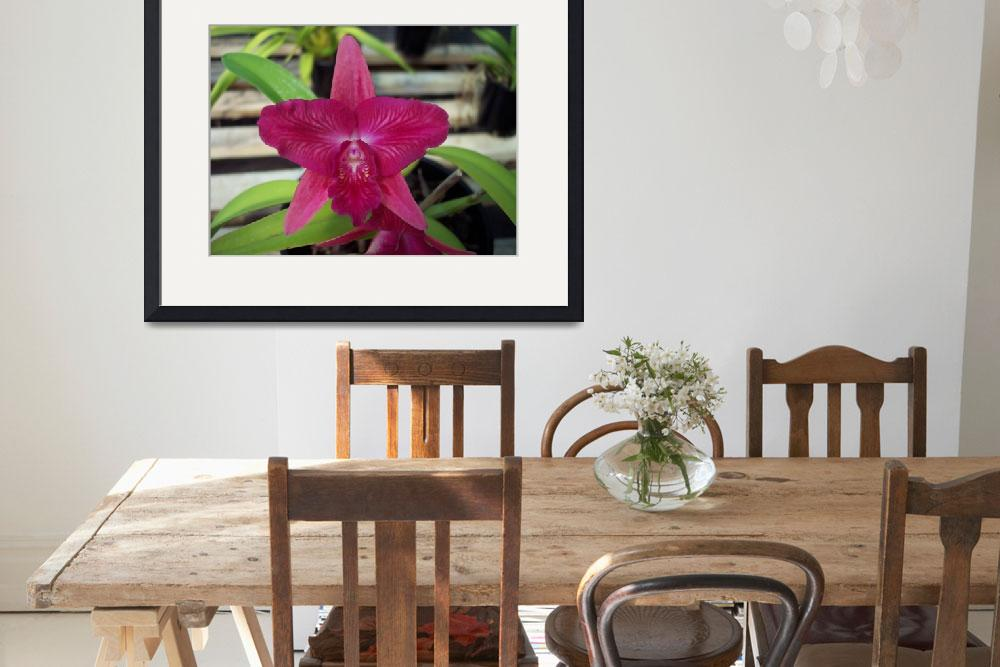 """Cattleya Orchid&quot  by marlenechallis"