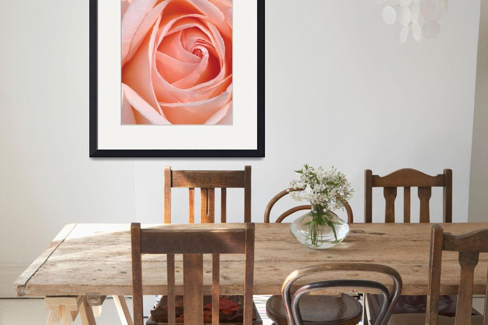 """Flower 001a Pink Spring Rose&quot  (2010) by Ricardos"