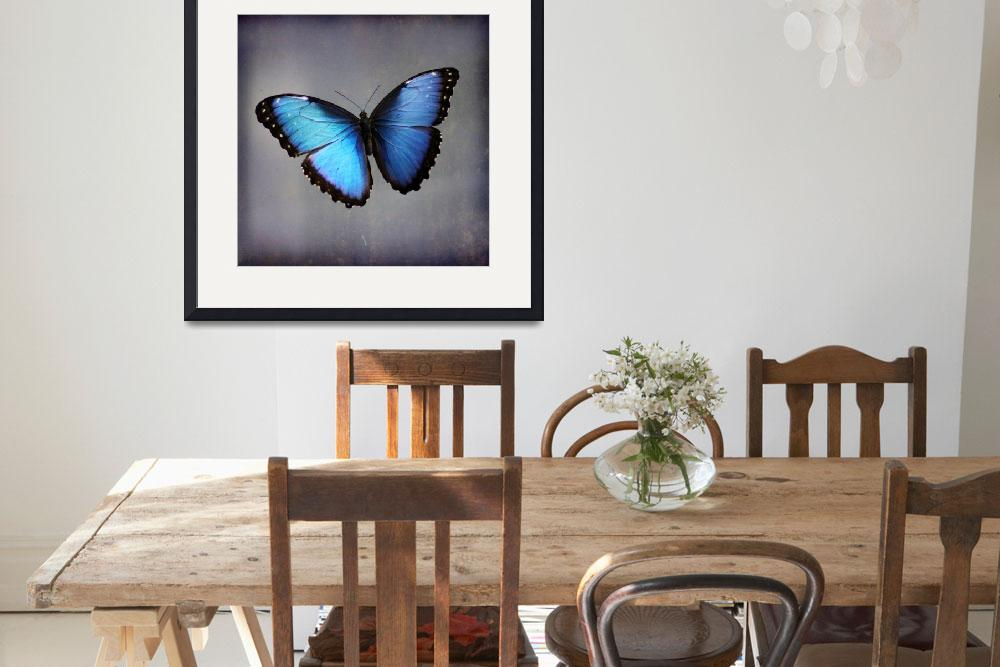"""Blue Morpho Butterfly Square&quot  (2015) by KsWorldArt"