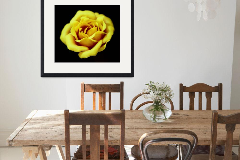 """Yellow Rose&quot  by budo"